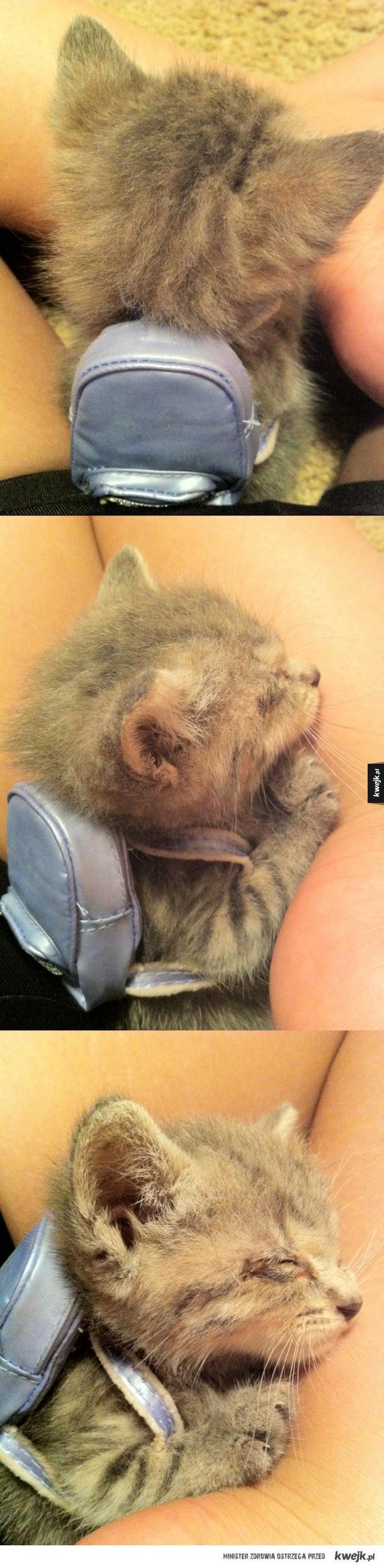 Kotek z plecaczkiem