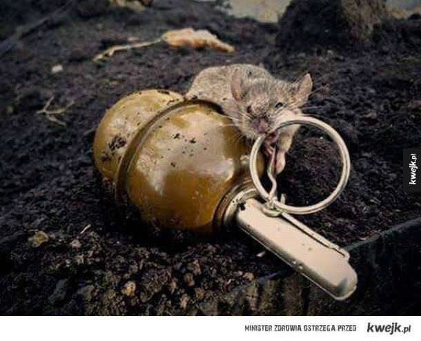 Mysz w Donbasie