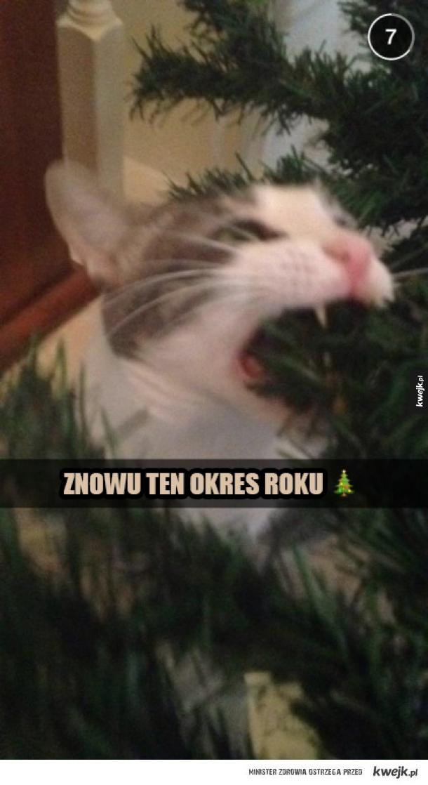 święta, koty, choinki