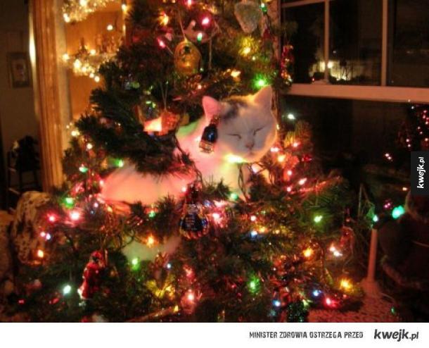 Kotek świąteczny