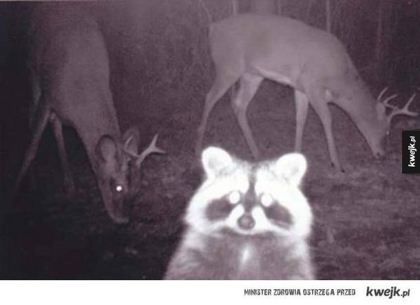 Zwierzęta uchwycone przez fotopułapki