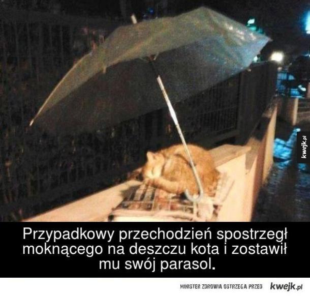 Przypadkowy przechodzień spostrzegł moknącego na deszczu kota i zostawił mu swój parasol