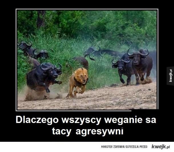 zdziwiony lew