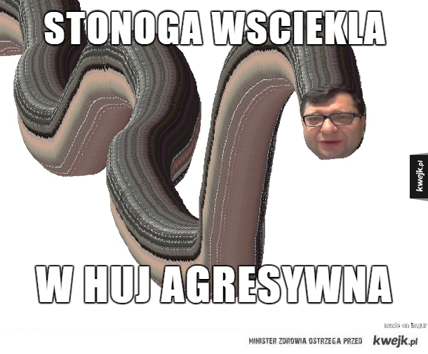 Stonóg