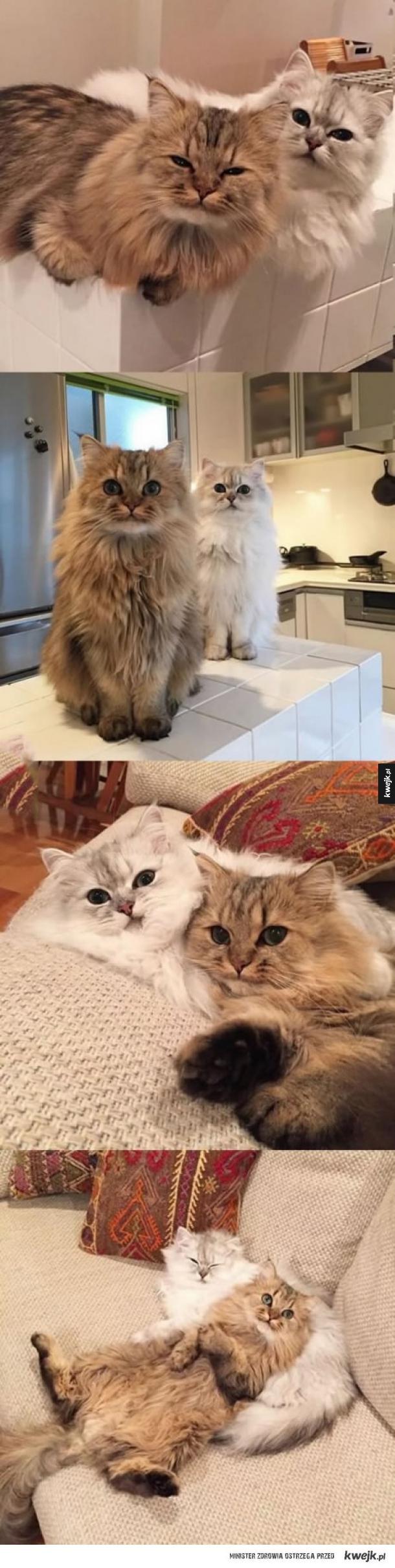 Co te koty