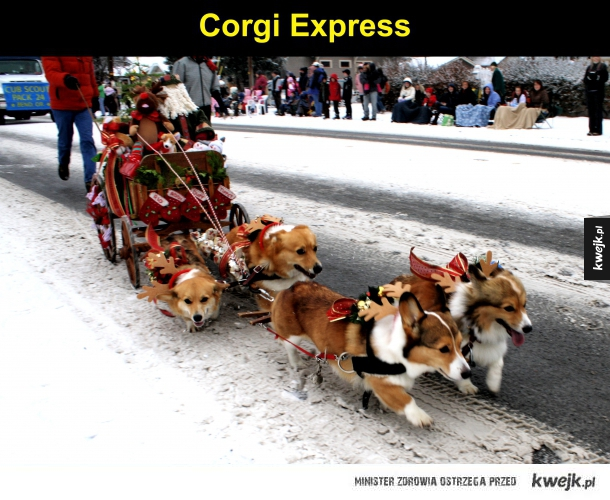 corgi express