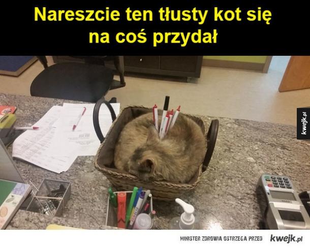 kot na długopisy