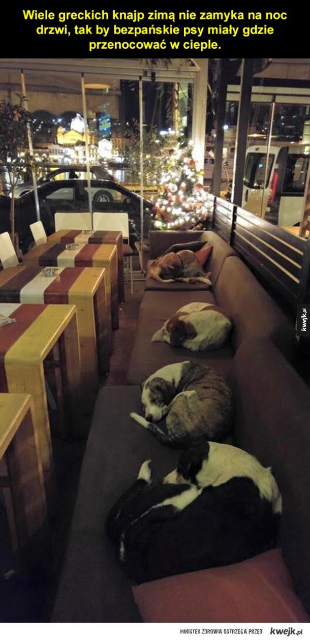 Pieski mają gdzie spać