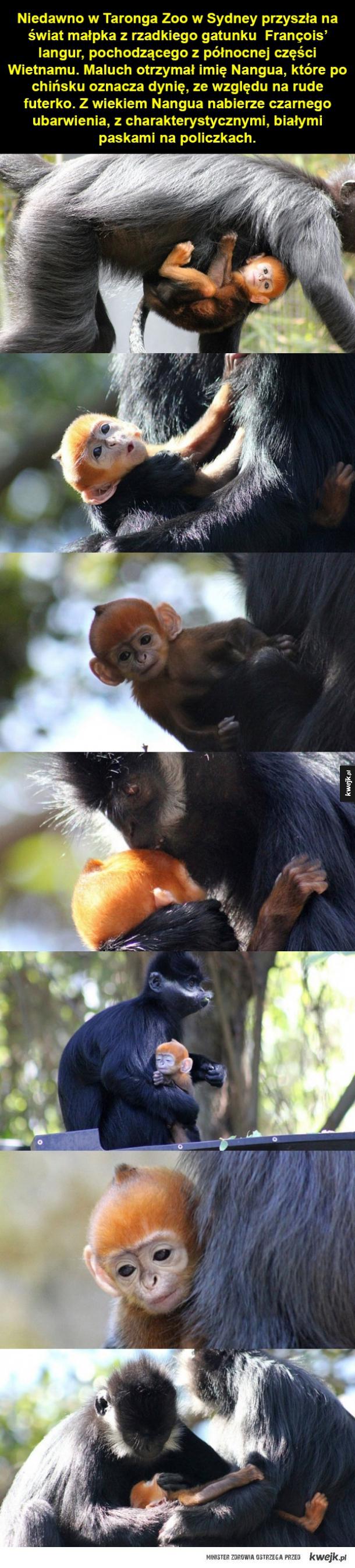 Słodki przedstawiciel zagrożonego gatunku