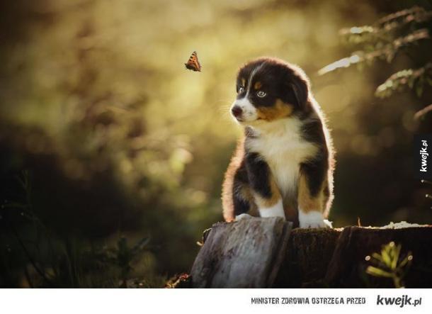 Niesamowite portrety psów autorstwa Anne Geier