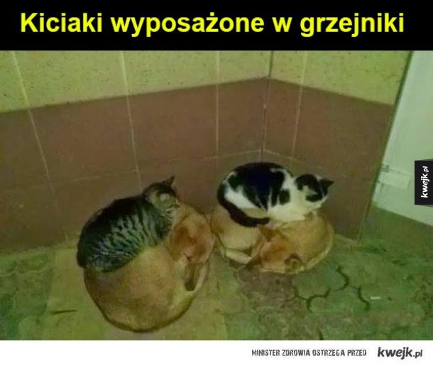 kiciaki