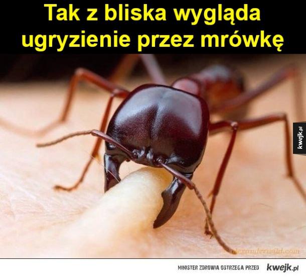 Mrówki!