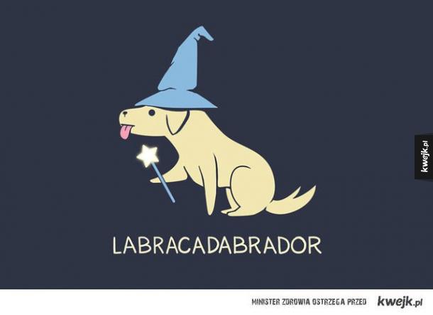 Labrador czarodziej