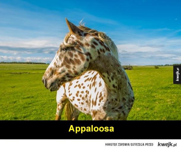 Rasy koni, o których nigdy nie słyszałeś
