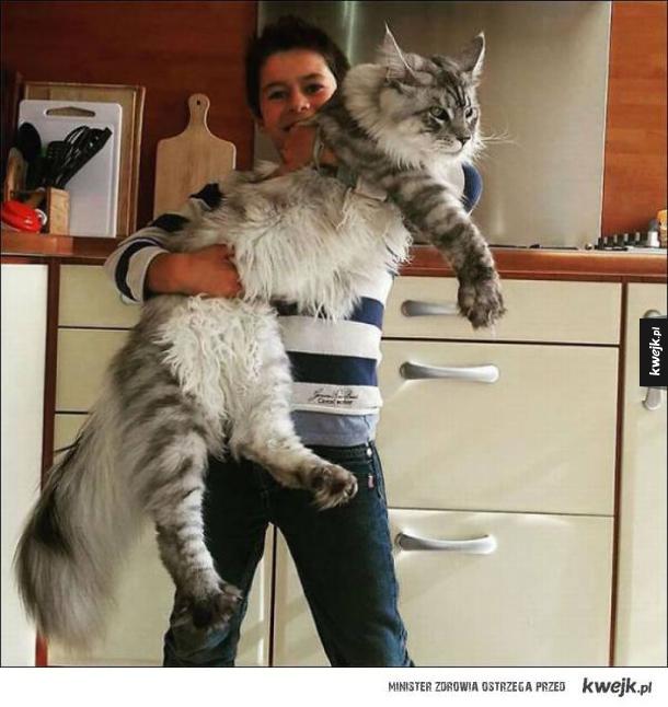 Z kociakiem