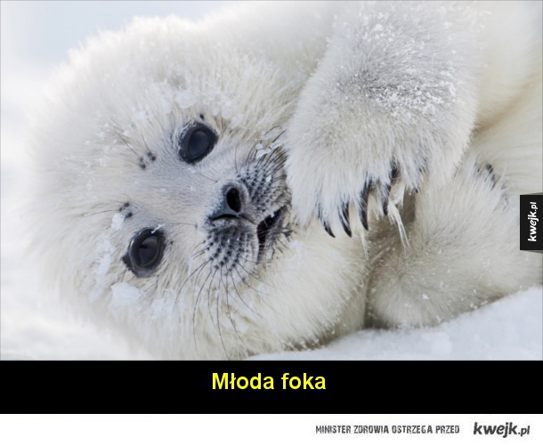 Zwierzęta Arktyki na fotografiach Floriana Schulza
