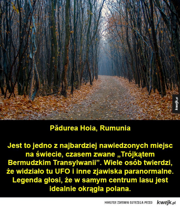 Tajemnicze lasy z całego świata