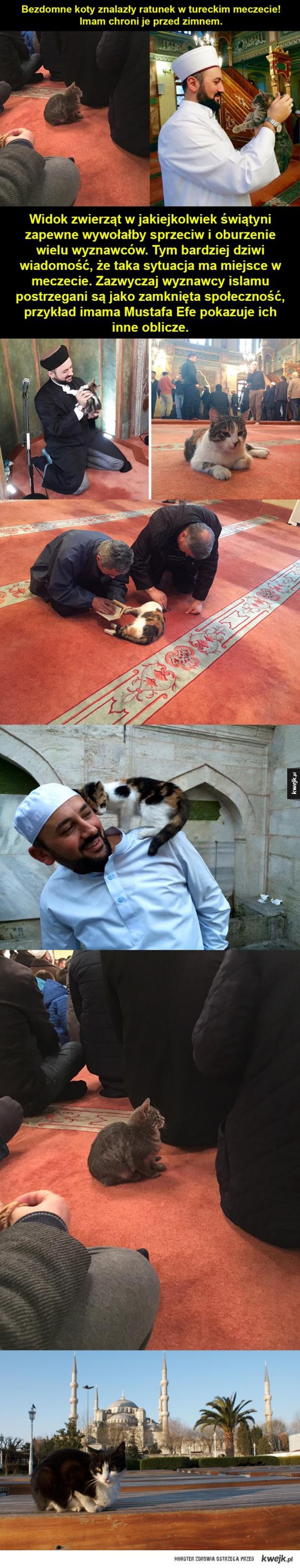 koty w meczecie