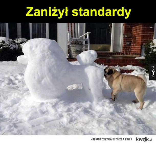 standardy