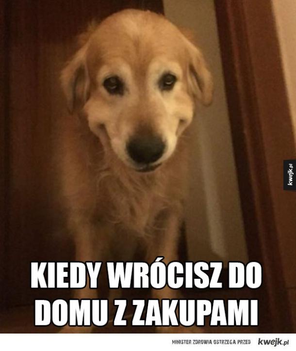 pies szczęśliwy