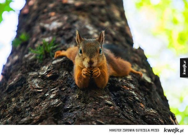 Wiewiórki są urocze