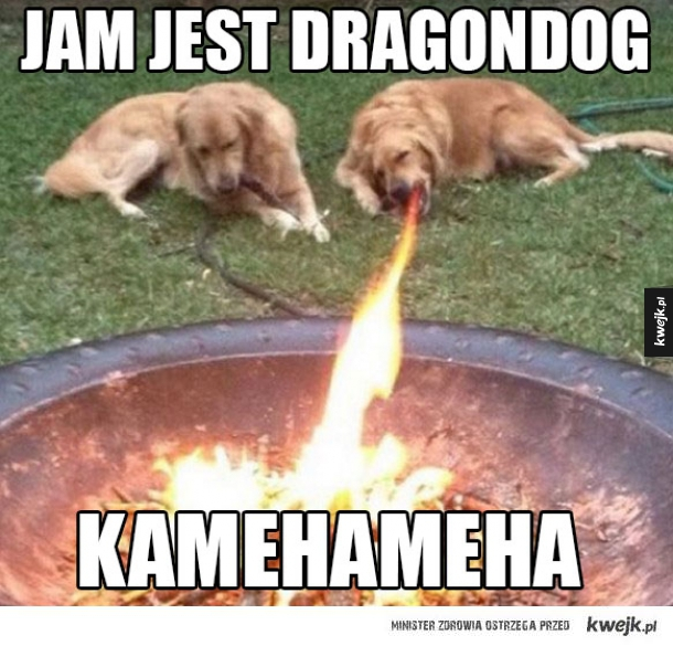 dragon dog