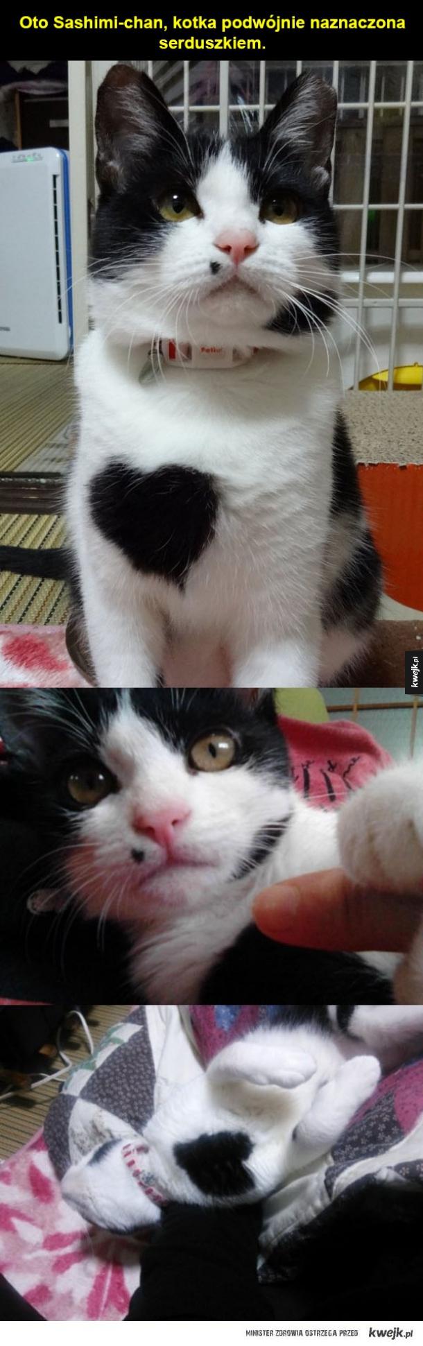 Słodka koteczka z nietypowymi łatkami