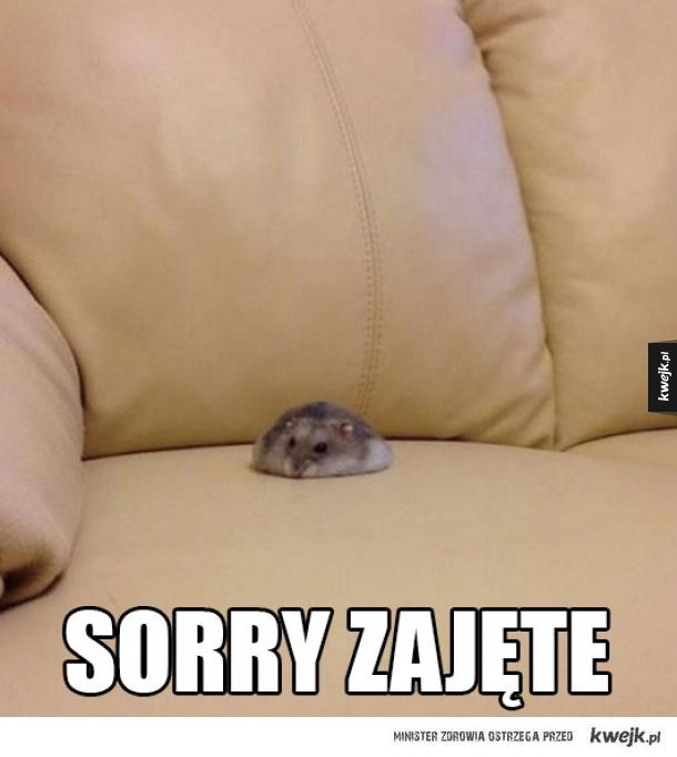 sorry no