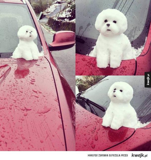 śnieżny pies wow