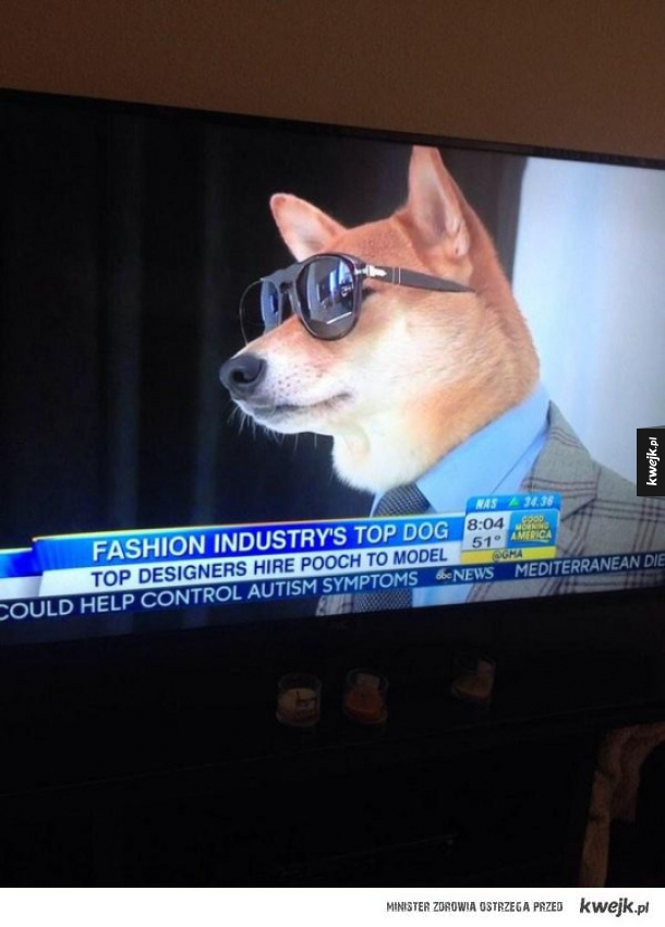 Fashion Doge