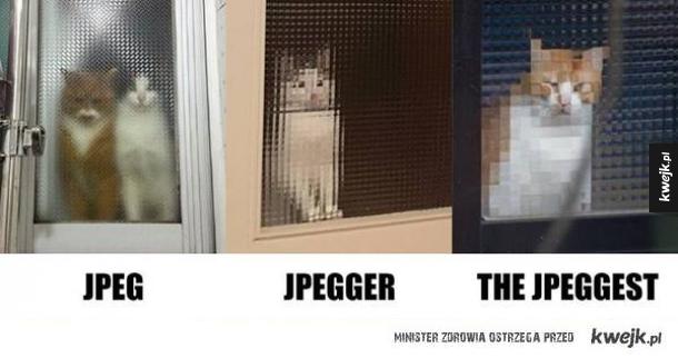 kot w jpeg