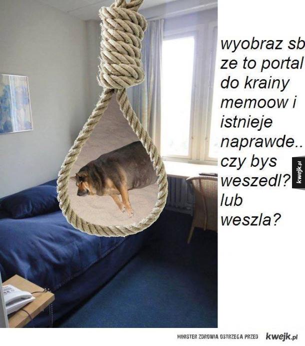 Portal do krainy memów