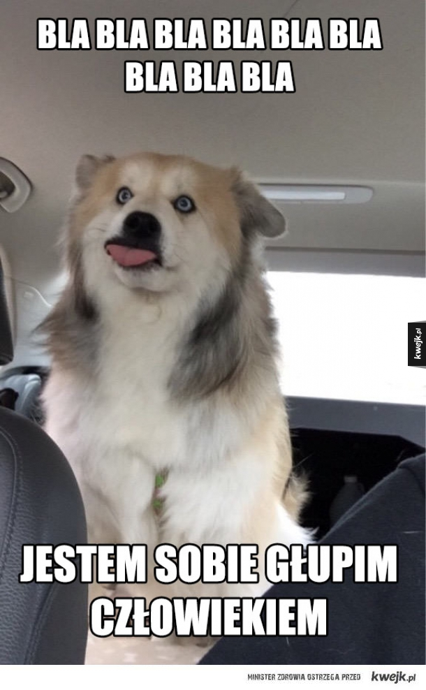 kiedy pies mnie przedrzeźnia
