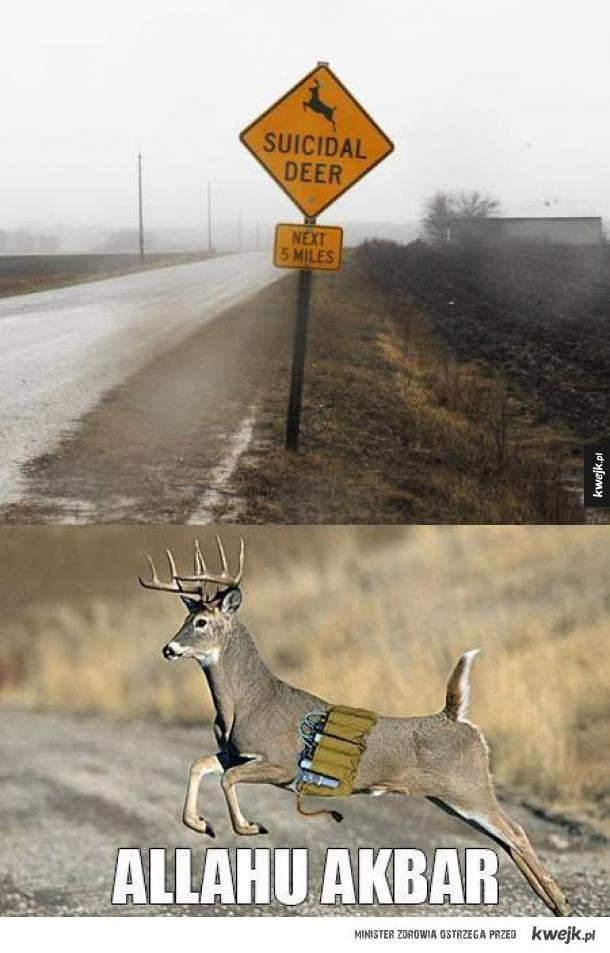 uwaga na muslimskie jelenie