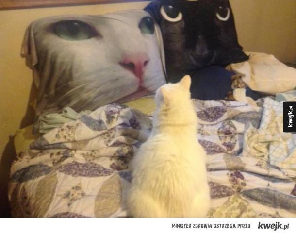 poduszkza z kotem