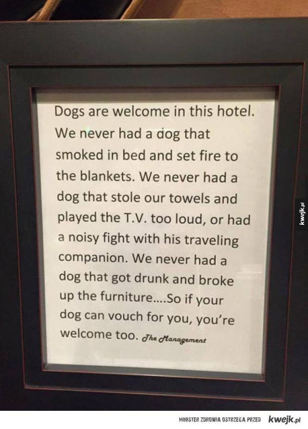 psy mile widziane