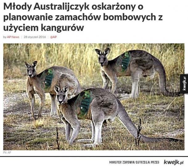 Zabójcze kangury