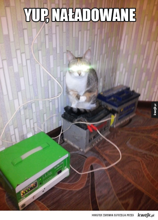 naładowany kot