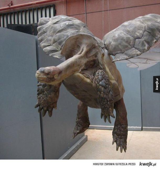 Latający żółw!