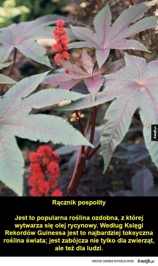 Rośliny trujące dla zwierząt domowych i ludzi