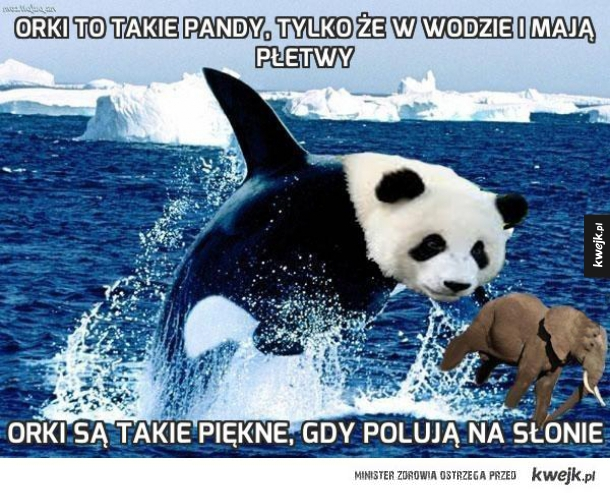 Orki to takie pandy