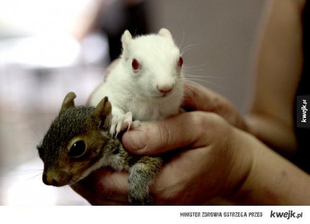 Słodkie zwierzęta albinosy