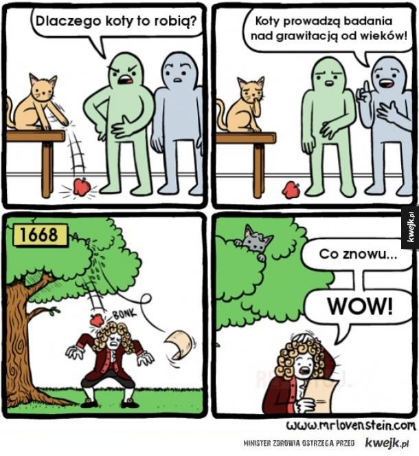 Prawda o kotkach