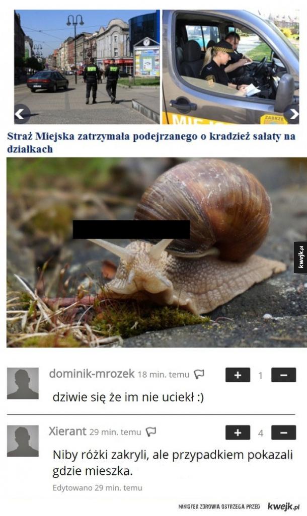 Ślimak złodziej