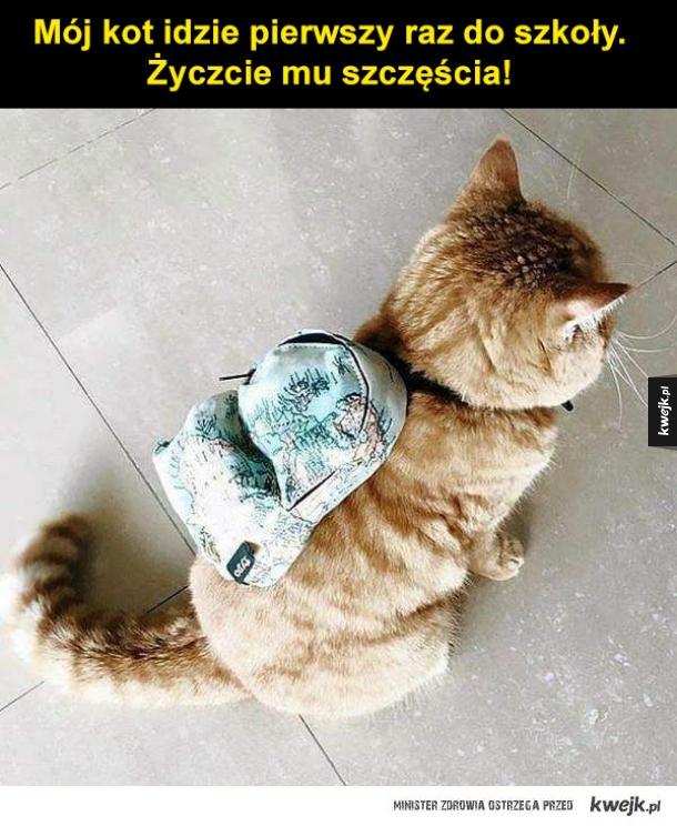 powodzenia kotku