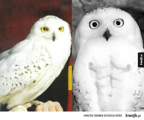 Hedwiga kiedyś i dziś