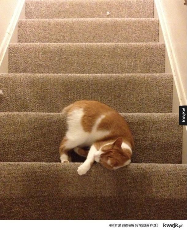 Koty zasną wszędzie