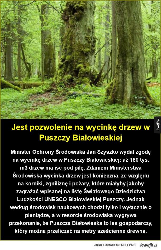 Czarny scenariusz dla Puszczy Białowieskiej - Jest pozwolenie na wycinkę drzew w Puszczy Białowieskiej. Minister Ochrony Środowiska Jan Szyszko wydał zgodę na wycinkę drzew w Puszczy Białowieskiej; aż 180 tys. m3 drzew ma iść pod piłę. Zdaniem Ministerstwa Środowiska wycinka drzew jest konieczna, ze w