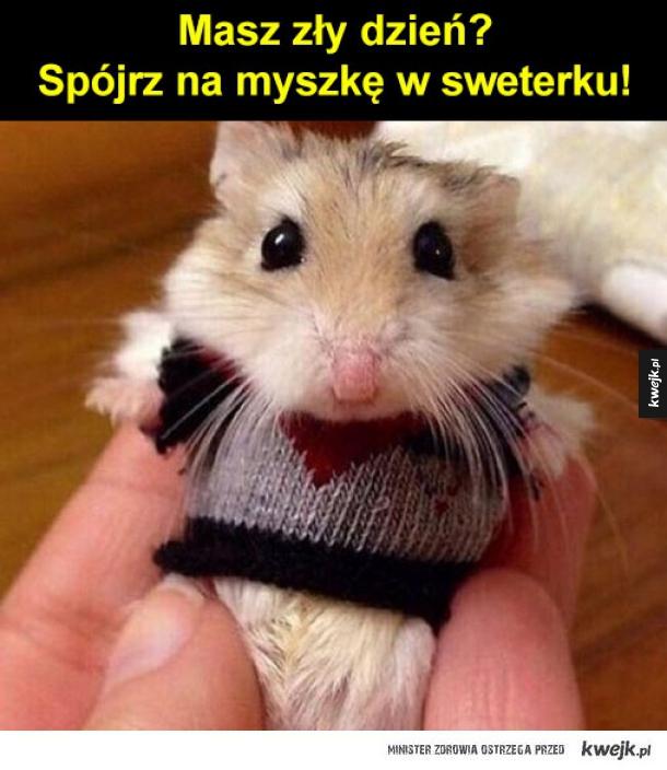 słodka myszka