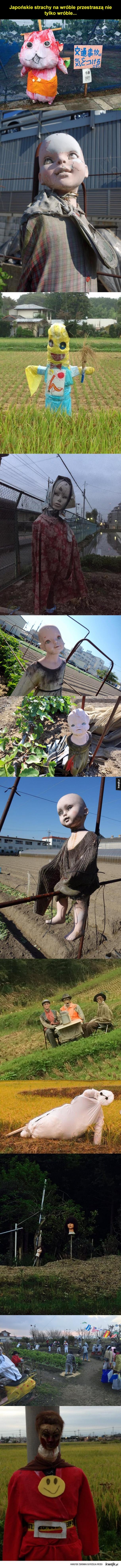 Japoński strachy na wróble